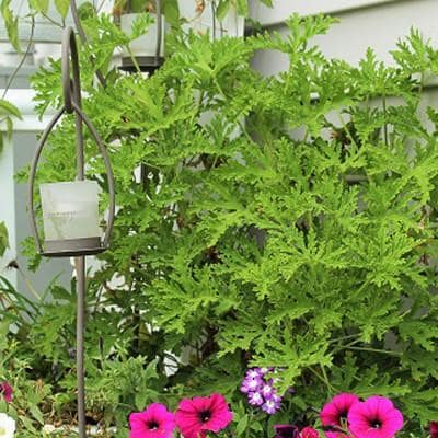 What You Should Know About Mosquito Repellent For Yard Care